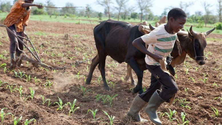 Farming in Zambia