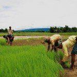 Advarsel: Nyt globalt fødevaresystem for at nå FN's mål for bæredygtig udvikling
