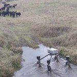 Yippee Ki-yay: Swagbot Tackles Cattle Herding in Australia