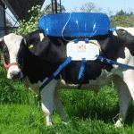 Die Dämonisierung von Rindern ist ein wichtiges Ziel des Klimawandels