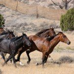 BLM Board Condemns 45,000 Wild Horses To Death Or Banishment