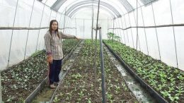 Thai Greenhouse
