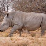 Nuevo susto: los científicos dicen que la mitad de todas las especies podrían extinguirse este siglo