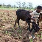 Feudalism: Zambia's Poorest Farmers Becoming 'Squatters On Their Own Land""