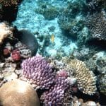 "Aussie Professor Sues University: Das ""sterbende"" Great Barrier Reef stirbt NICHT"