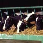 Primero carne artificial, ahora leche artificial, todo sin vacas
