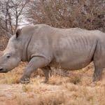 Científicos: los humanos causan la tasa de extinción 1000x de animales y plantas
