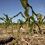 Os cientistas da desgraça e da escuridão advertem agora da fome no mundo inteiro