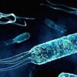 Navy Looking Skapa nya marina genetiskt modifierade organismer för att upptäcka fienderunder