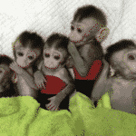 Monstrous: China Clones Monkeys, Edits Genes To Make Mentally Ill