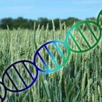 GMO-matolja anländer tyst på restauranger