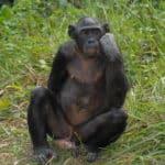 Científicos tecnócratas buscan crear quimeras mono-humano