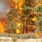 CA Fires: Forest Mismanagement Pawned Off On Climate Change