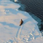 Massive Sea Ice Growth In Antarctic Portends New Ice Age