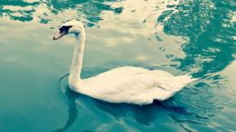 Green Swan