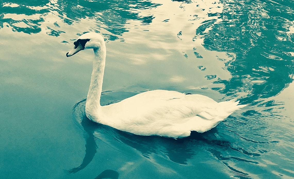 Cisne verde