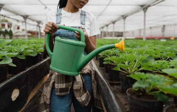 Impfstoffe in Ihrem Salat? Wissenschaftler bauen mit Medikamenten gefüllte Pflanzen an, um Injektionen zu ersetzen